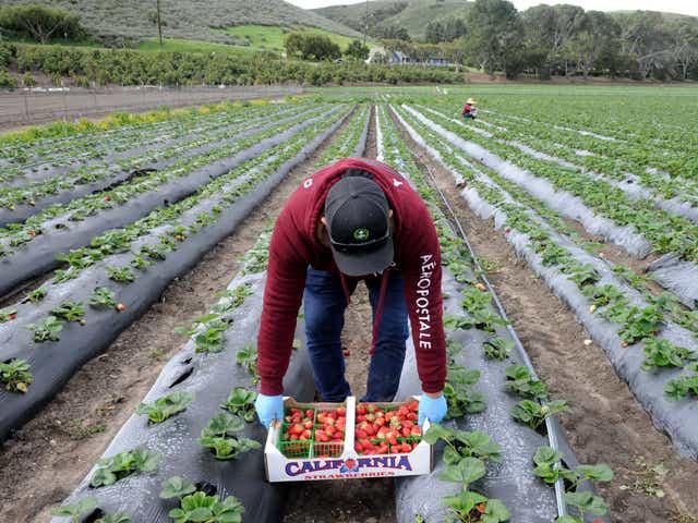 Organic Hydroponic Gardening